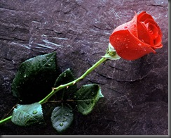 ws_Red_Flower_1152x864