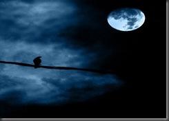 moon moonlight bird