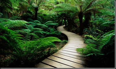 nature-wood-road