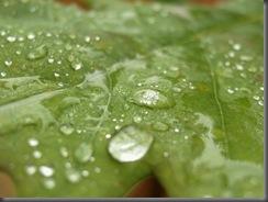 rain drops 03